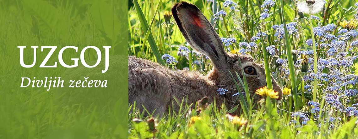 Slider-divlji zec